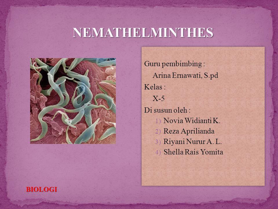 nemathelminthes kelas x