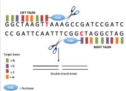 papillomavírus onkolitikus vírus papillomatosis meghatározza