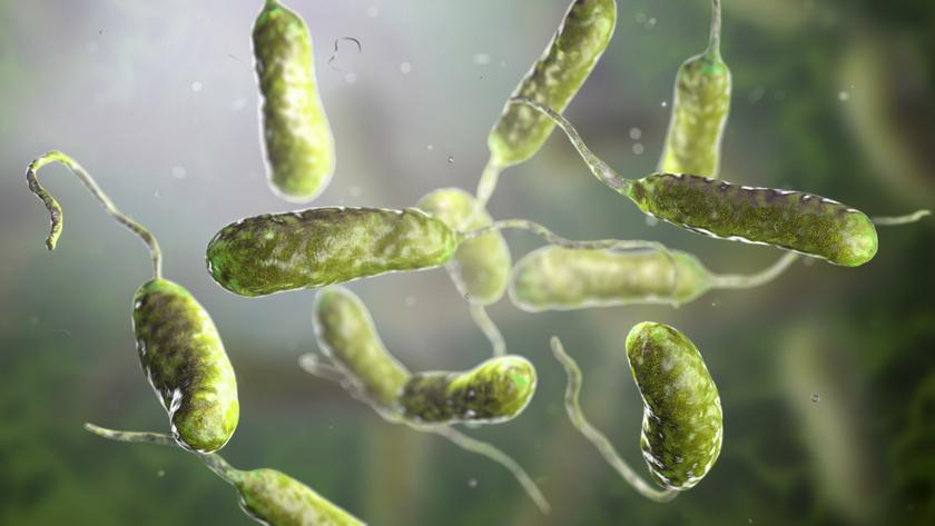 baktérium víz)