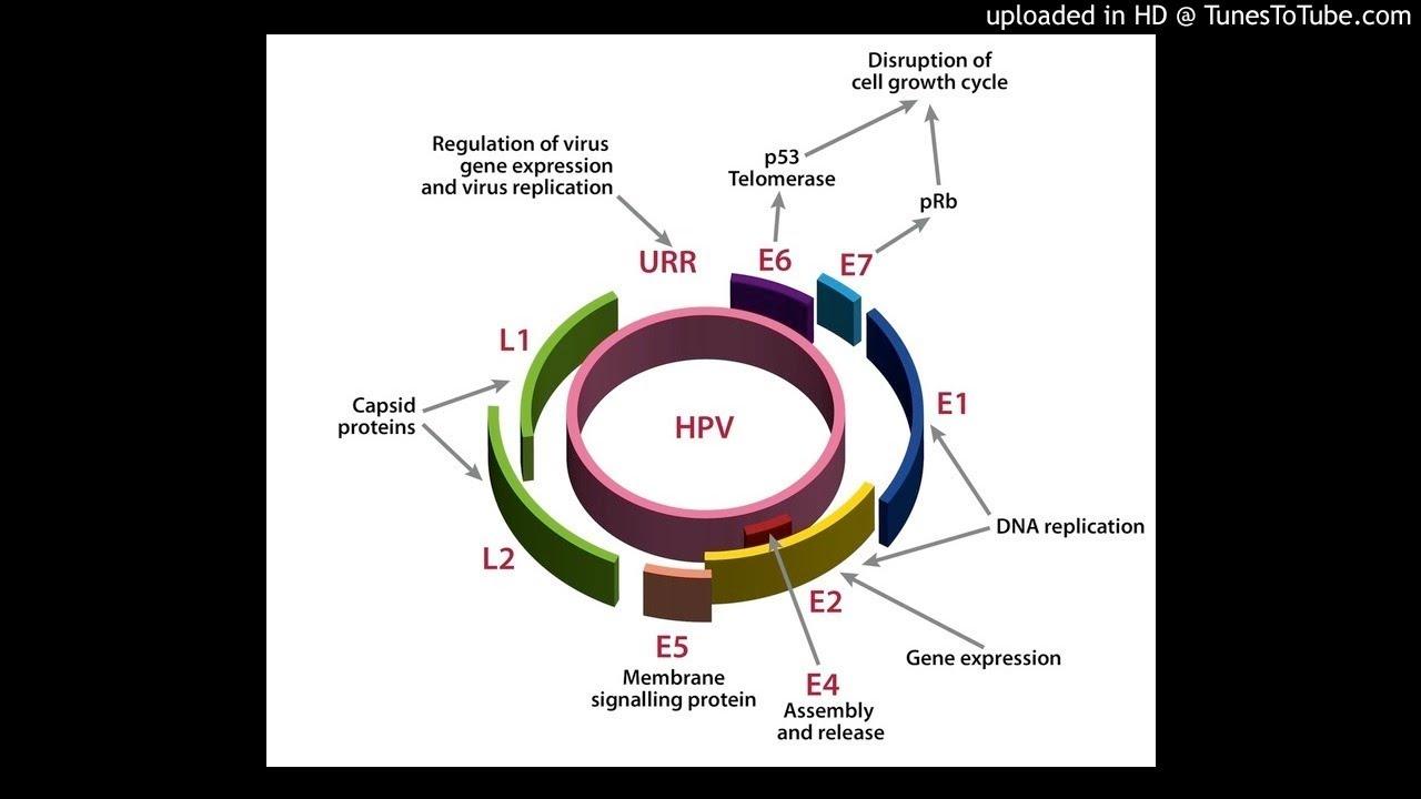 A hpv vírus dat een soa)
