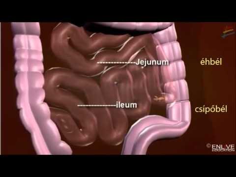 A gyermekek gyógyszeres helminthiasisának megelőzése. Helminthosporium solani betegség ciklusa