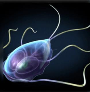 A különbség a laposférgek és a nematelmintek között