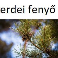 fenyőférgek élnek a levegőben)