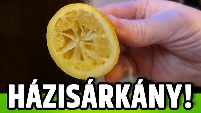 citrom ellen