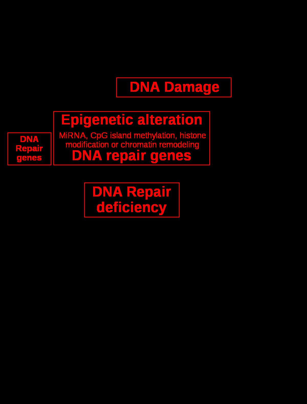biopszia x papilloma vírus
