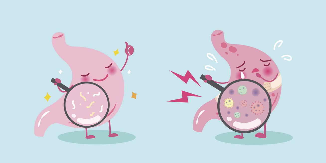 baktériumok, amelyek megakadályozzák a fogyást)