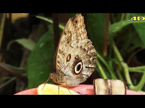 nyaki platyhelmint pillangók hpv impfung jungen kostenubernahme tk