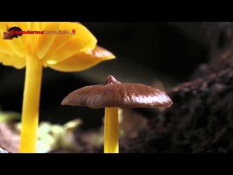 Paraziták a szervezetünkben: mikor gyanakodjunk?, Paraziták kezelése gombákkal