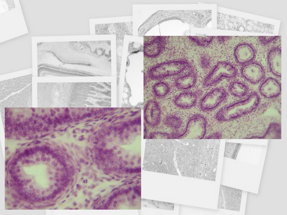 helmint és ektoparazita protozoonok)