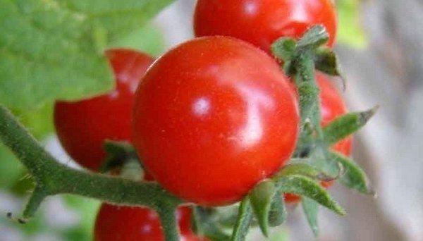 Nincs kiskerted? - Termessz fokhagymát a konyhában | Agrárium, mezőgazdaság és élelmiszeripar
