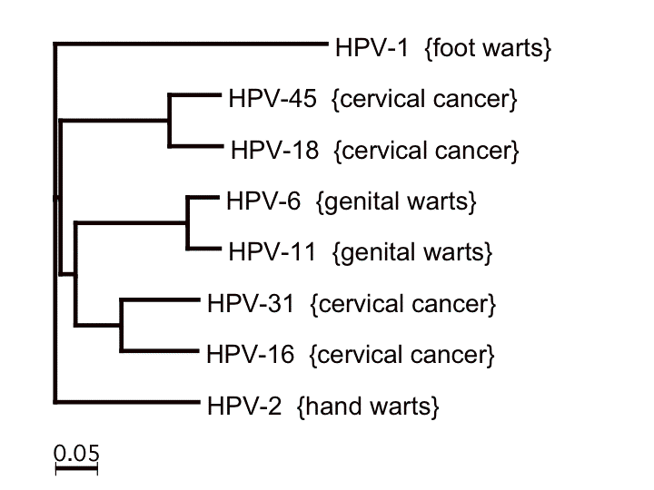 papillomavírus hpv 45)