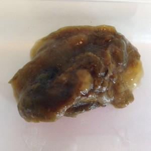 Giardia hond besmettelijk mens