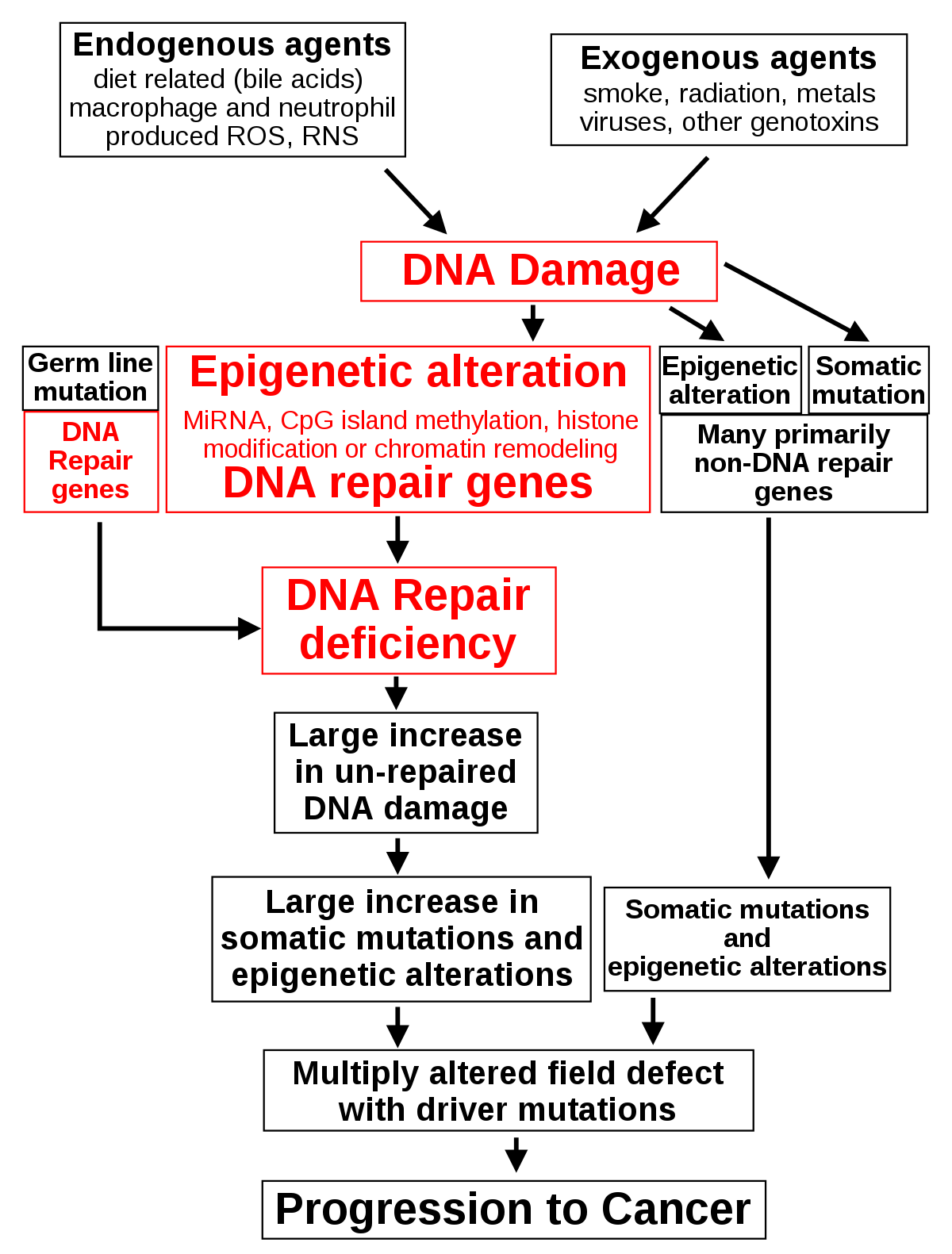 onkogén rizikójú papilloma