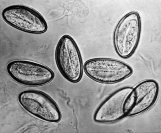 gyomorrák kezelése ppt papilloma virus szemolcs