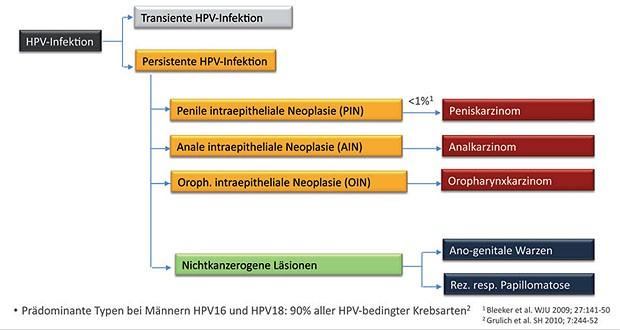 hpv impfung nach ansteckung