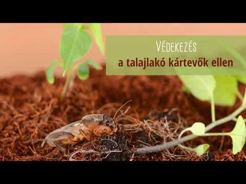 a körömféreg fontossága a természetben)