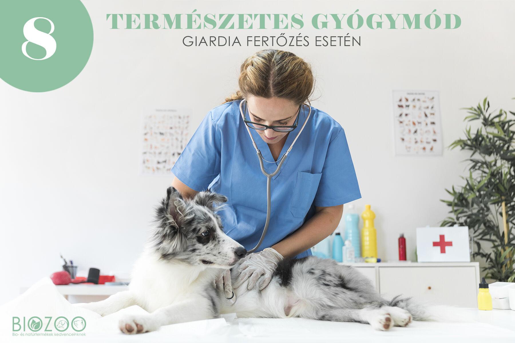 giardia ember kutya szájüregi rák meghatározása