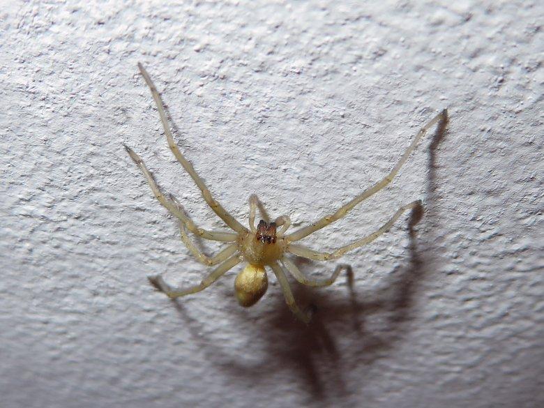 Halálos pókok - TUDOMÁNYPLÁZA - Élővilág