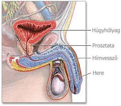 jóindulatú papilloma száj