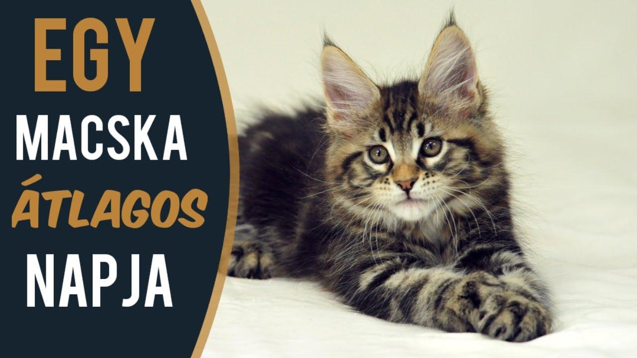 giardia férfi macska)