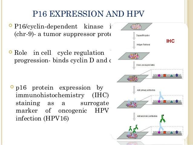 hpv p16 vírus)