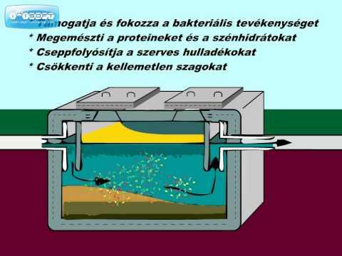 emésztő baktériumok