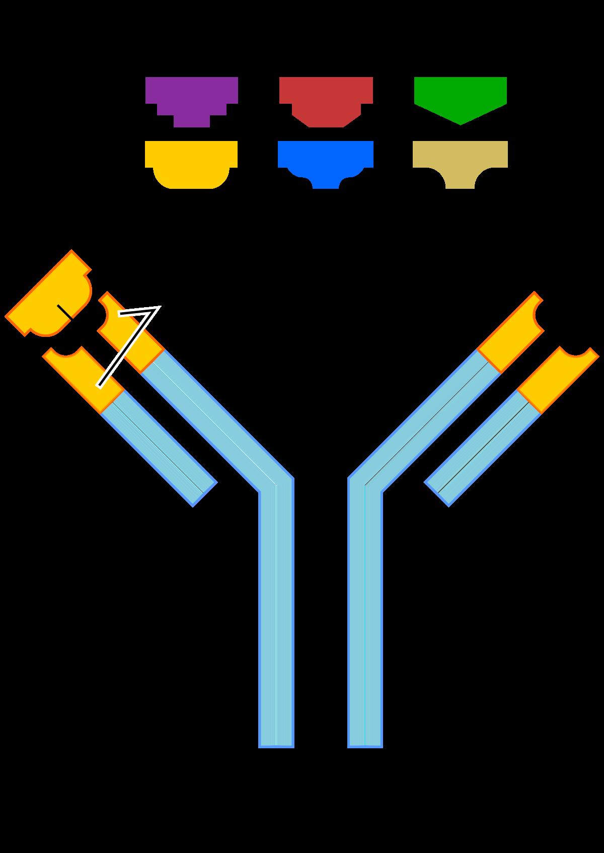 antitestek ellen zonoza giardia