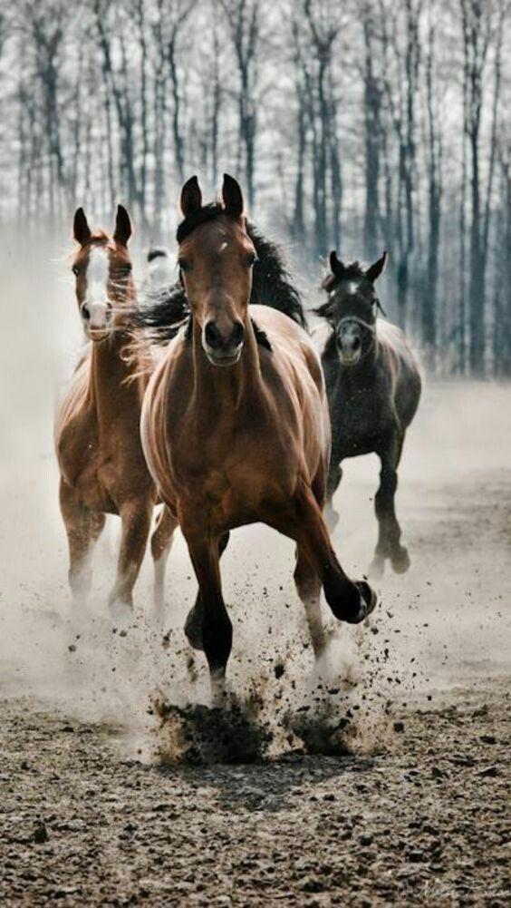 Szarkoid kezelése lovaknál gyógynövényekkel