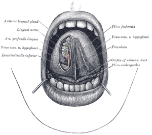 papillae a nyelv alatt