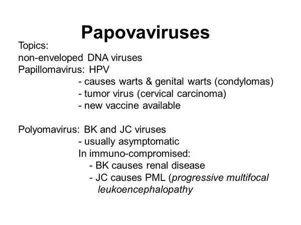 papilloma vírus jc