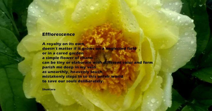 gardenia paraziták)