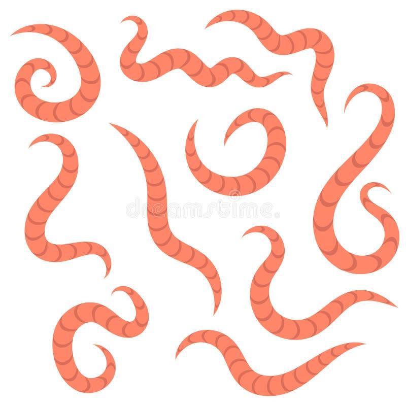 parazita pinworm