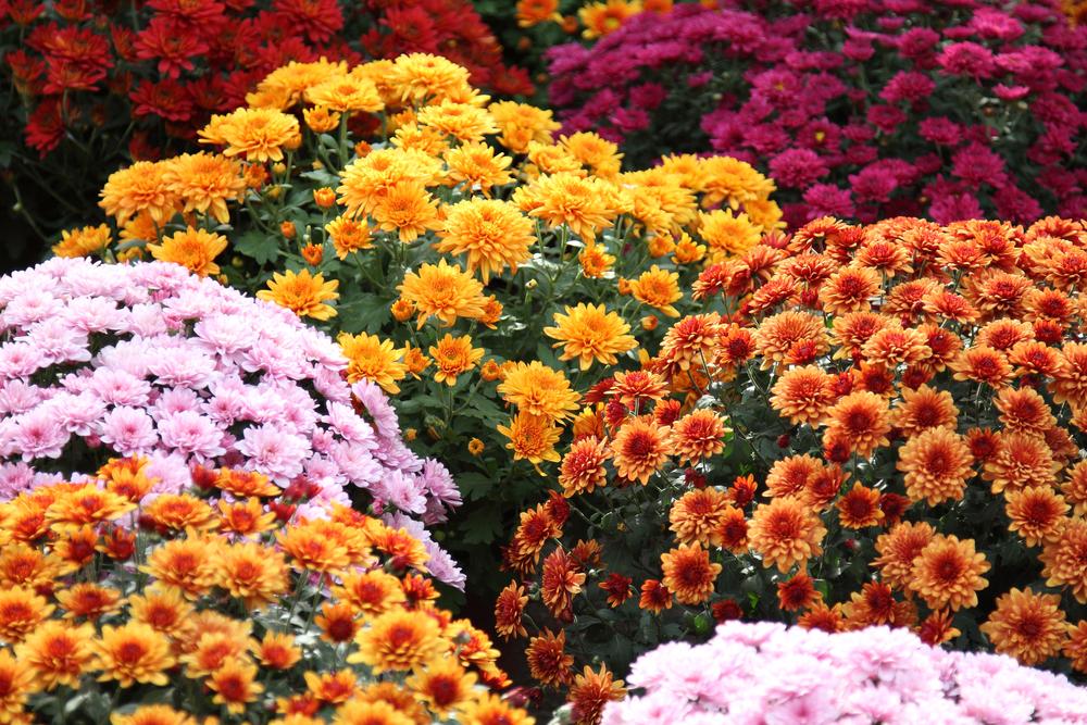 Ezeket a zöldségeket, virágokat júliusban kell elültetni | Femcafe