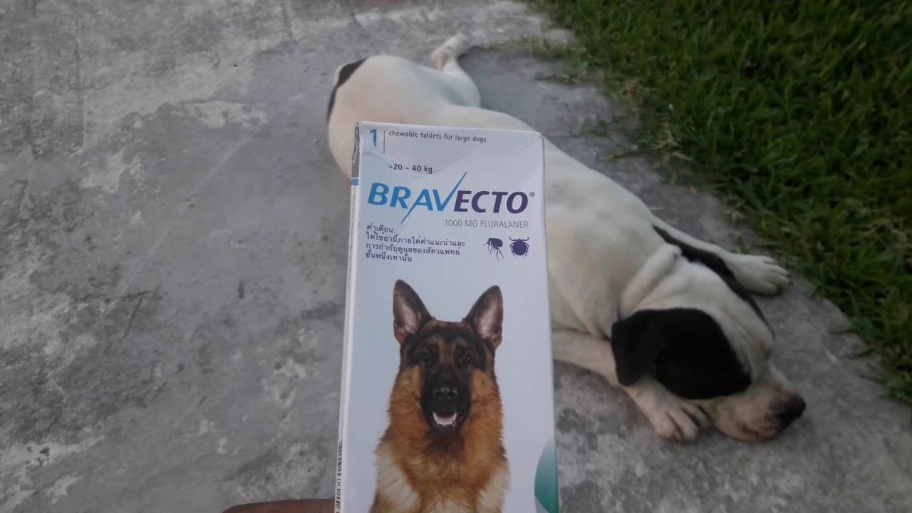 Fehérvári Állatorvos - A szívférgesség elleni védekezés módjai Bravecto szívféreg