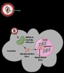 a hpv limfómát okoz gyertya nemi szemölcsök kezelésére