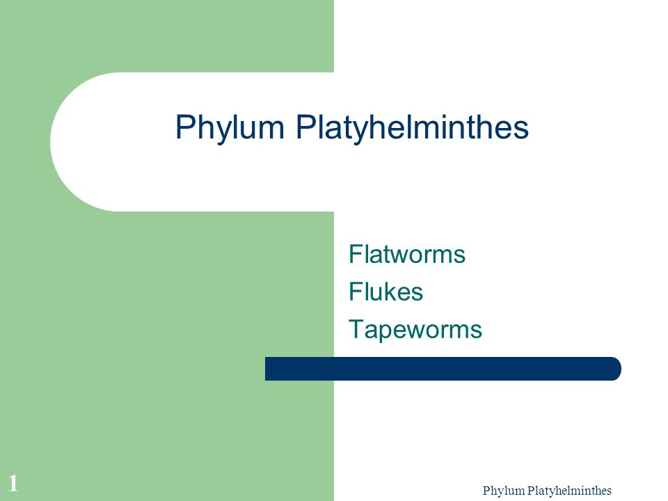 platyhelminthes phylum ppt)