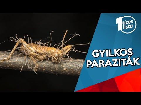 paraziták keményre főtt garnélával
