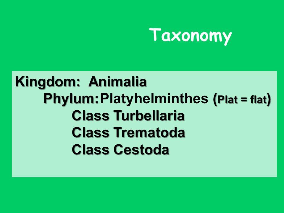 platyhelminth taxonómia)