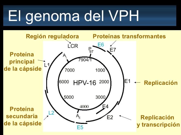 papillomavírus vph 16)