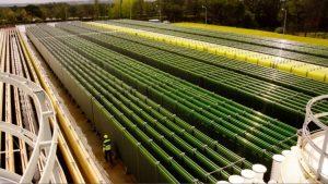 algák kiegészítése méregtelenítés
