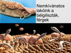 Metadon méregtelenítés. Paraziták tünetei es kezelése felnotteknel - Asztali osztályú féreg