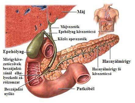 az epehólyag természetes kezelése