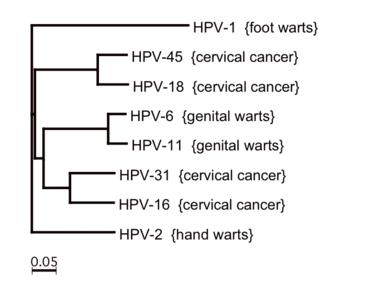 az eredetű papillomavírus
