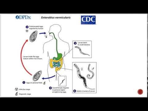hpv tedavisi hangi doktor hpv és tünetei