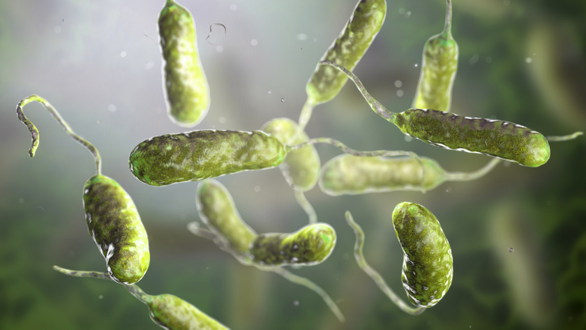 baktérium víz bolhák és tetű tetvek