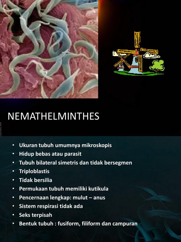 contoh nemathelminthes yang hidup bebas)