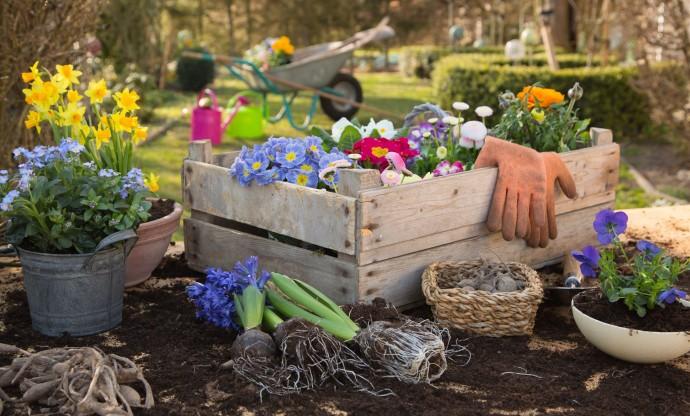 hatékony kertész)