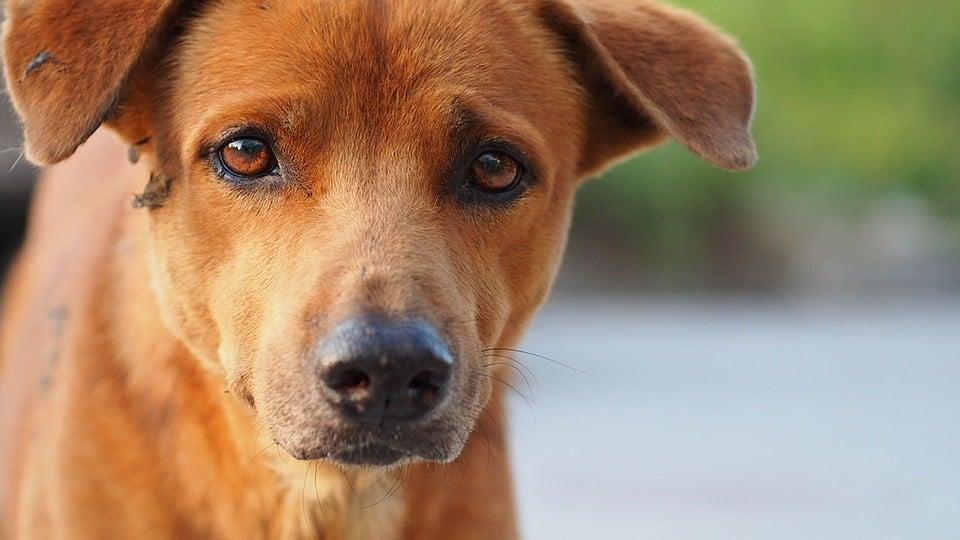 giardia hond ervaringen