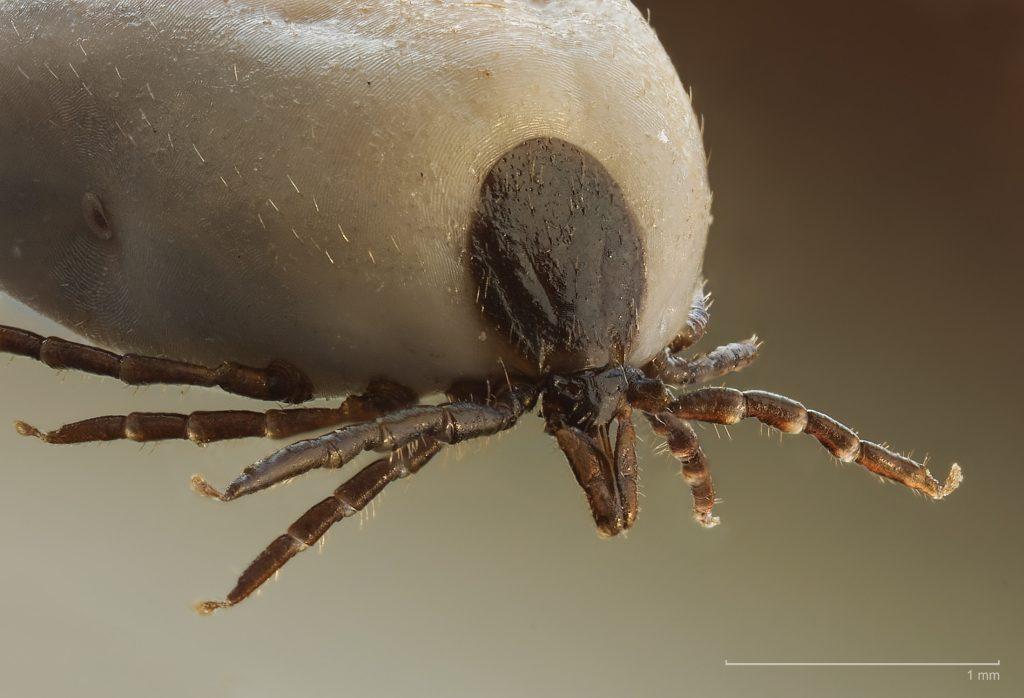 Vízben élő paraziták ontario. Mikorrhiza – Wikipédia