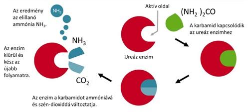a papillómák eltávolítása folyékony nitrogénárral